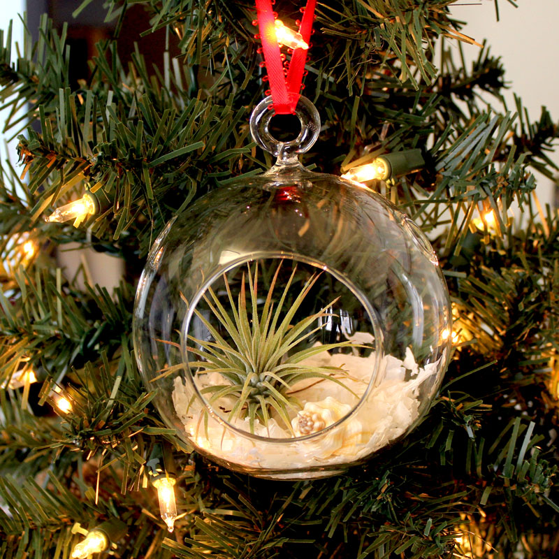 Easy air plant ornament