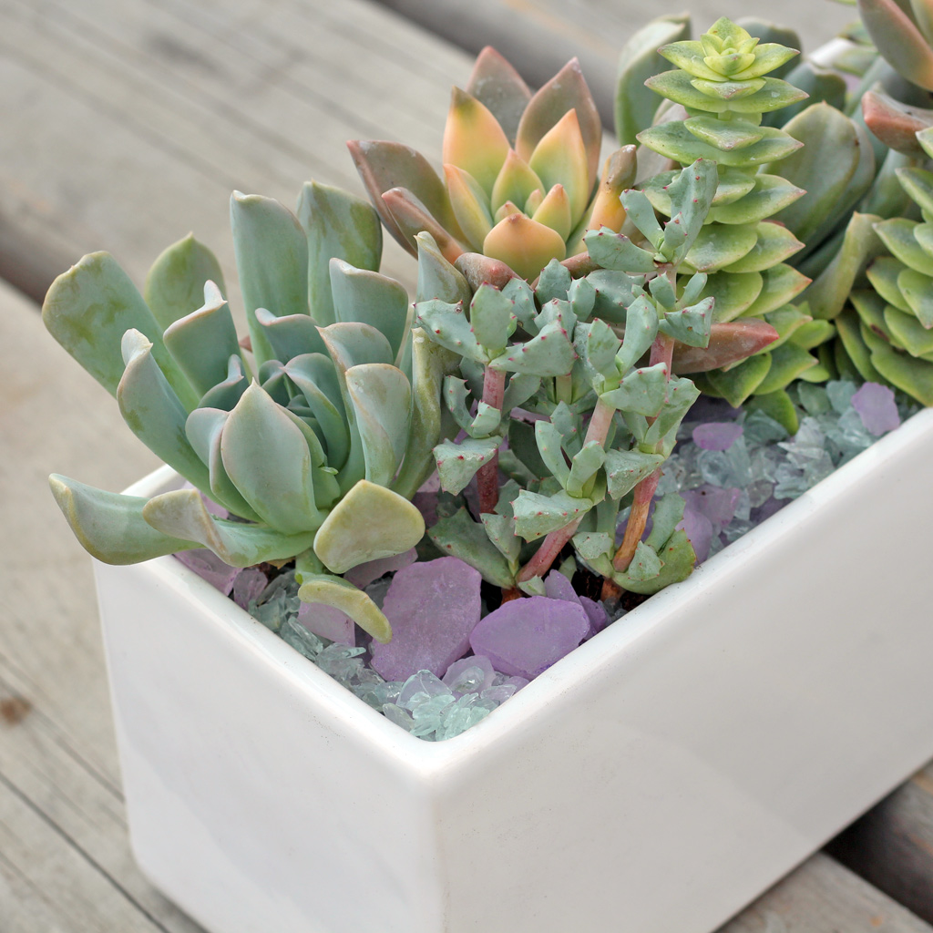 Soft succulents and top dressings