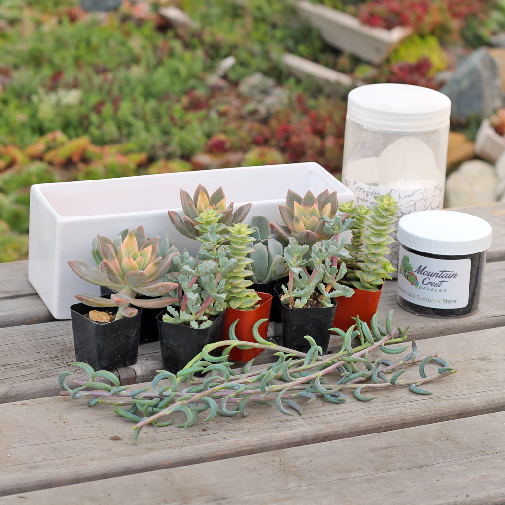 Soft succulents and planting accessories