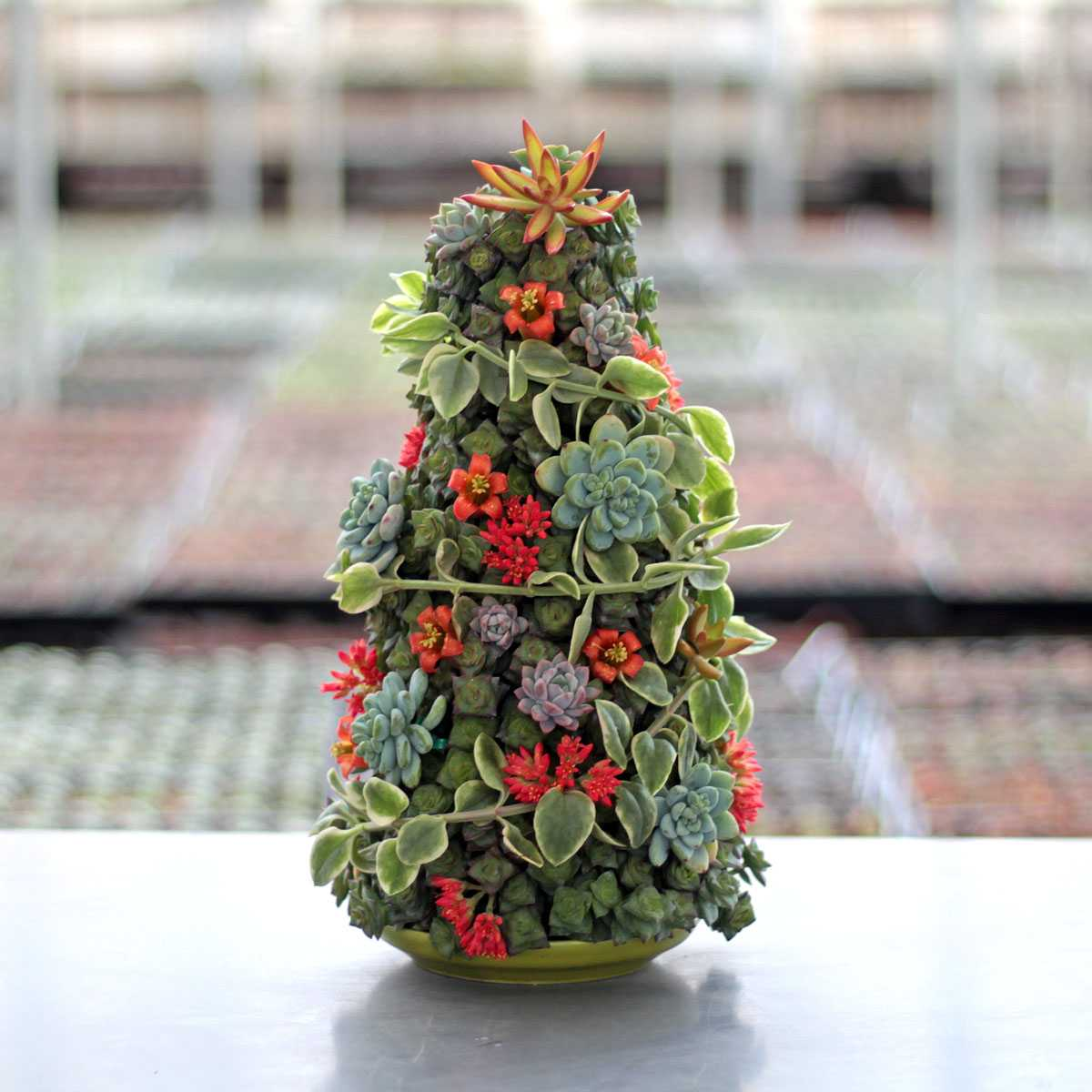 Succulent Christmas Tree Employee Creations Week 2 Mountain Crest Gardens