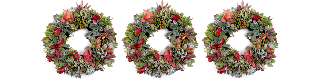 Wreath Forms Planted with Succulent Plugs