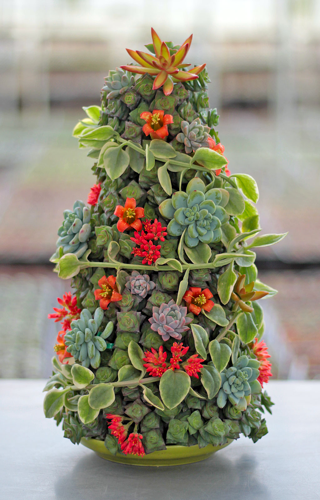 Tree made from succulent cuttings