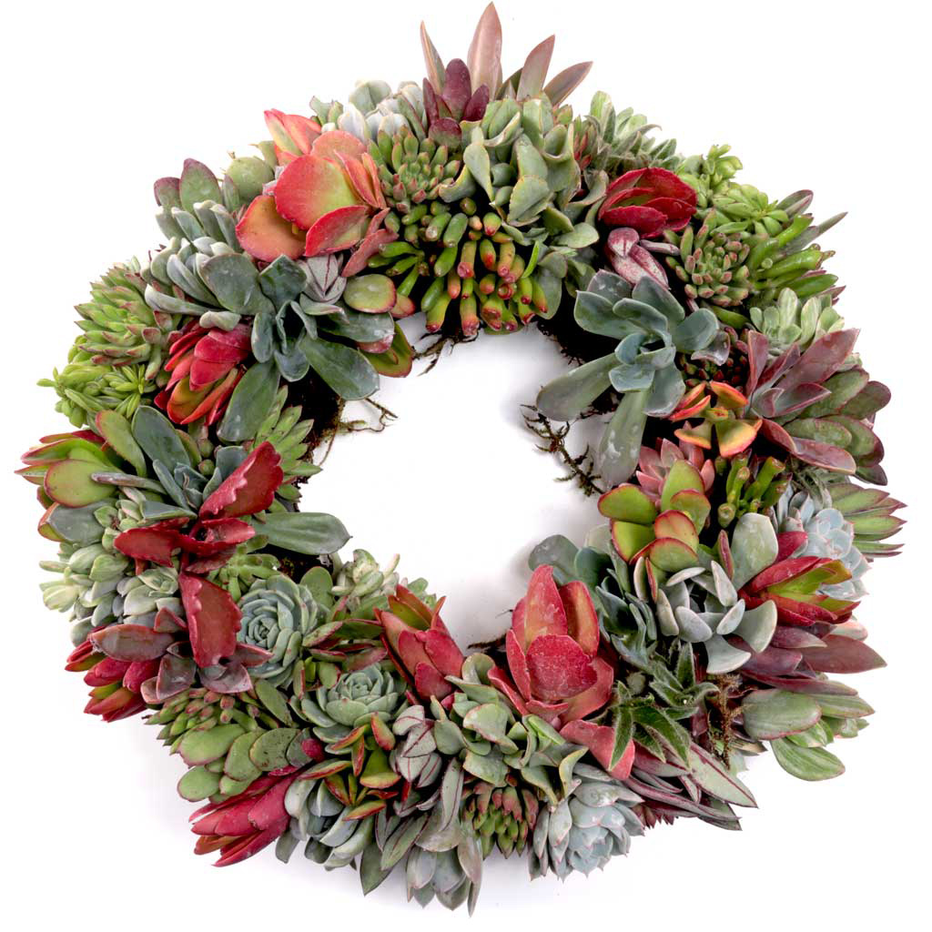 Wreath Form Filled with Succulent Cuttings