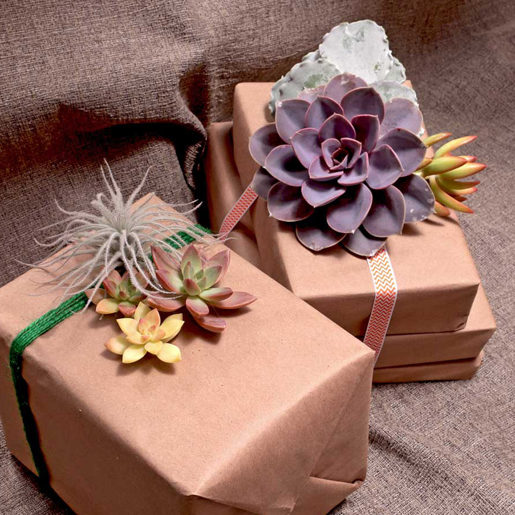 Gift Wrapping with Succulent Cuttings
