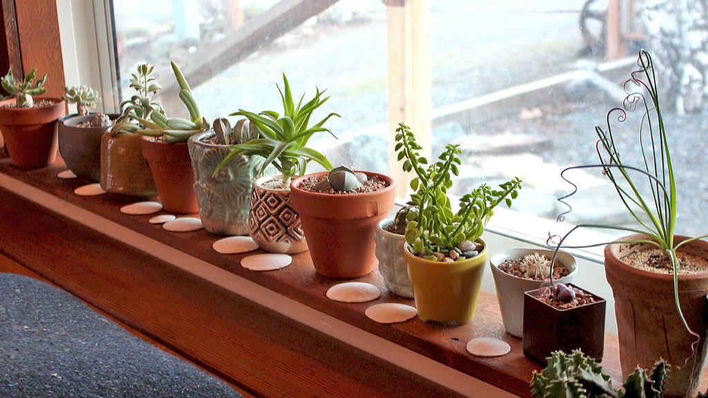 Succulent Grow Light Recommendations Mountain Crest Gardens