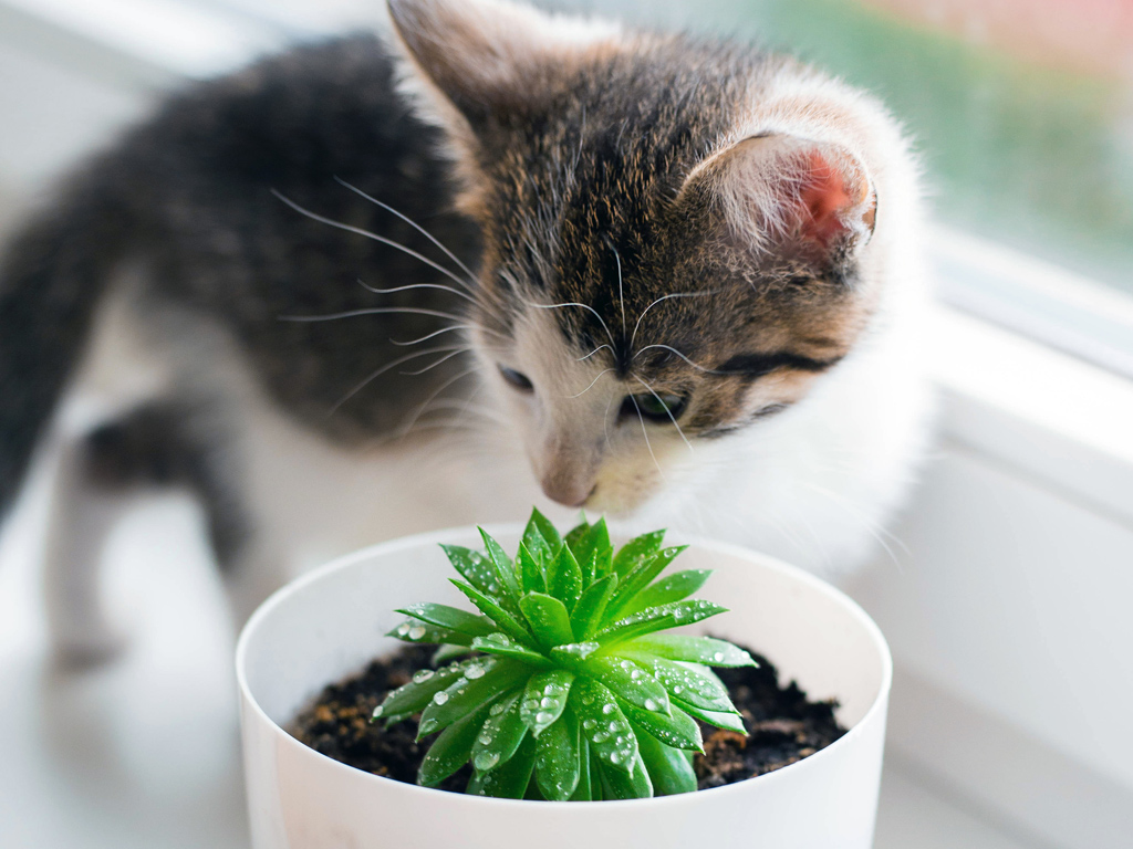 Succulents for Cats & Dogs: Safe or Toxic - Mountain Crest ...