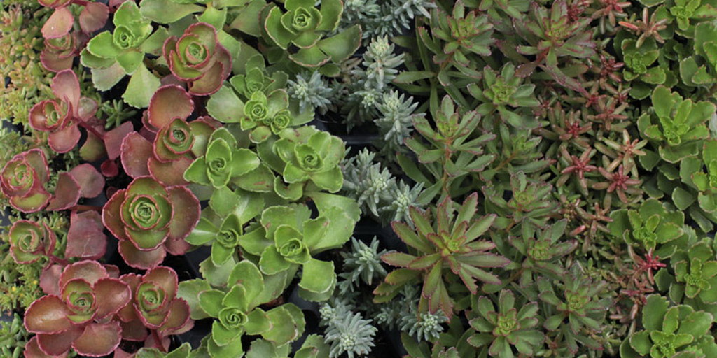 Succulents For Cats Dogs Safe Or Toxic Mountain Crest Gardens