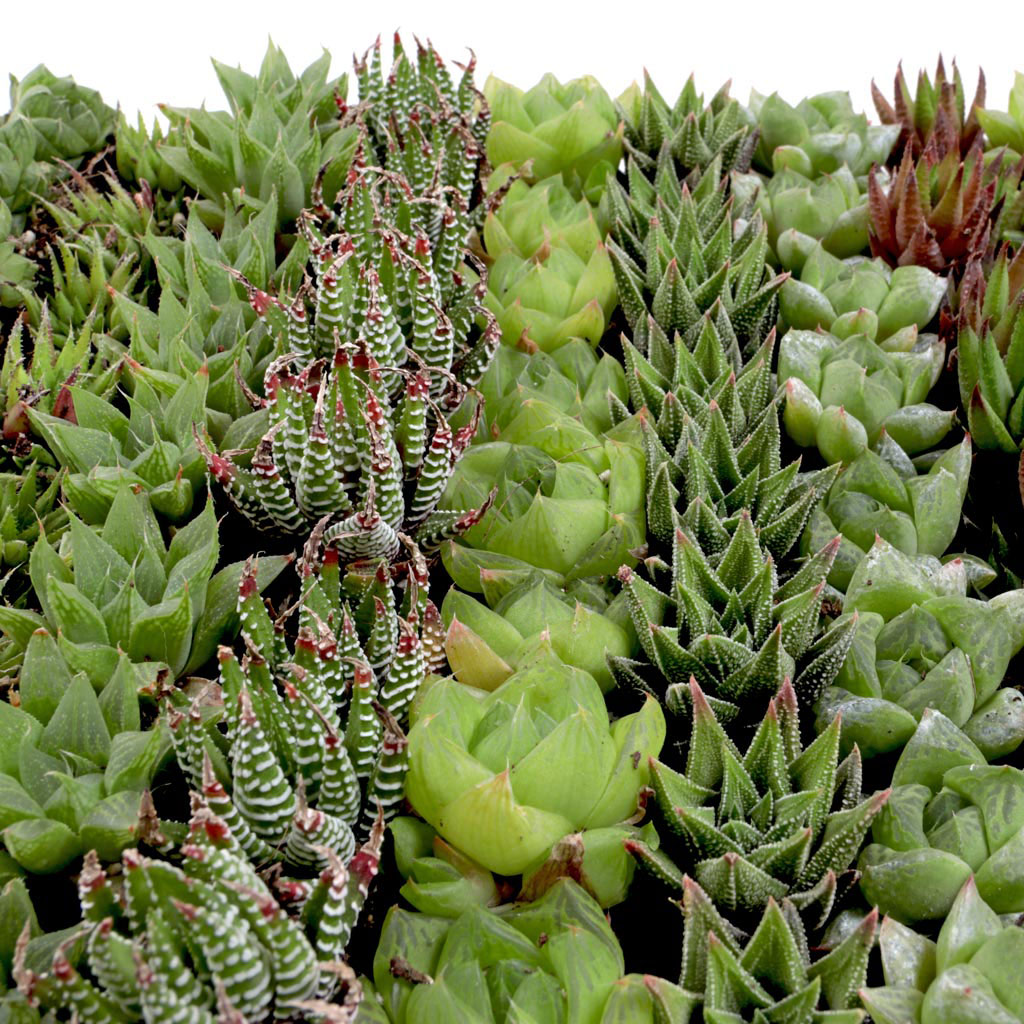 Pets And Your Succulents What You Should Know Mountain Crest Gardens
