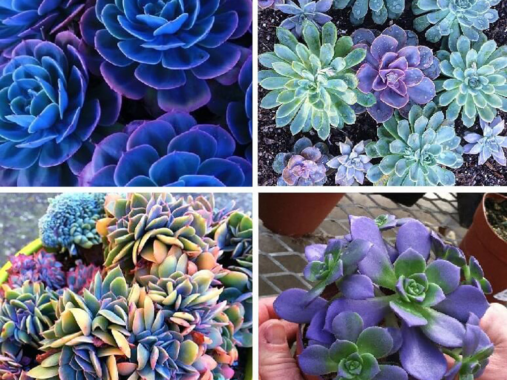 Growing Succulents From Seed Mountain Crest Gardens