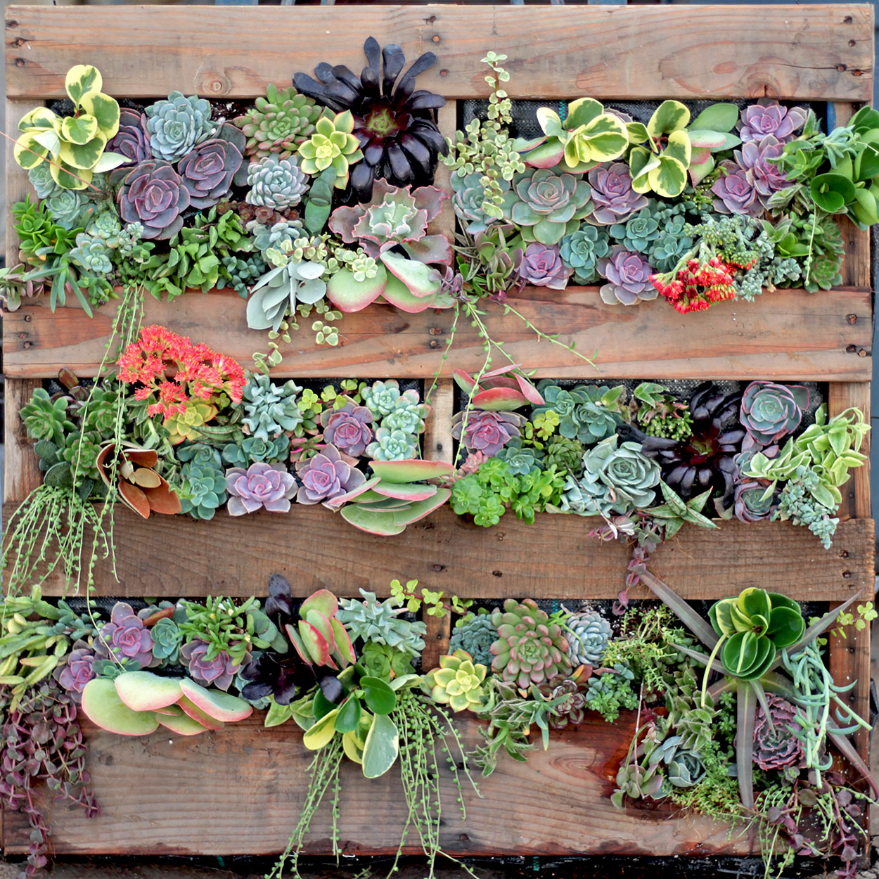 Beau Week 1 Is With Ashley, Our Production Supervisor, Who Has Been With Us For  5 Years. Ashley Has Decided To Create A Living Wall Using An Old Pallet.