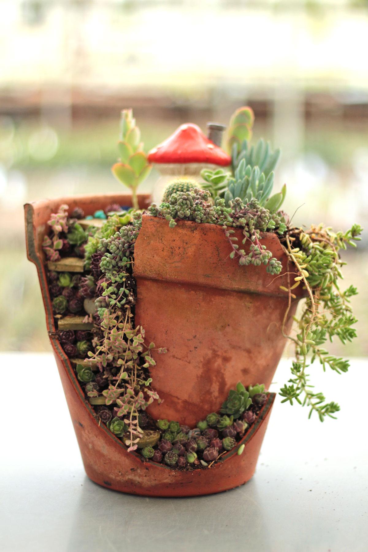 Small Succulent Fairy Garden - Employee Creations Week 12 - Mountain ...