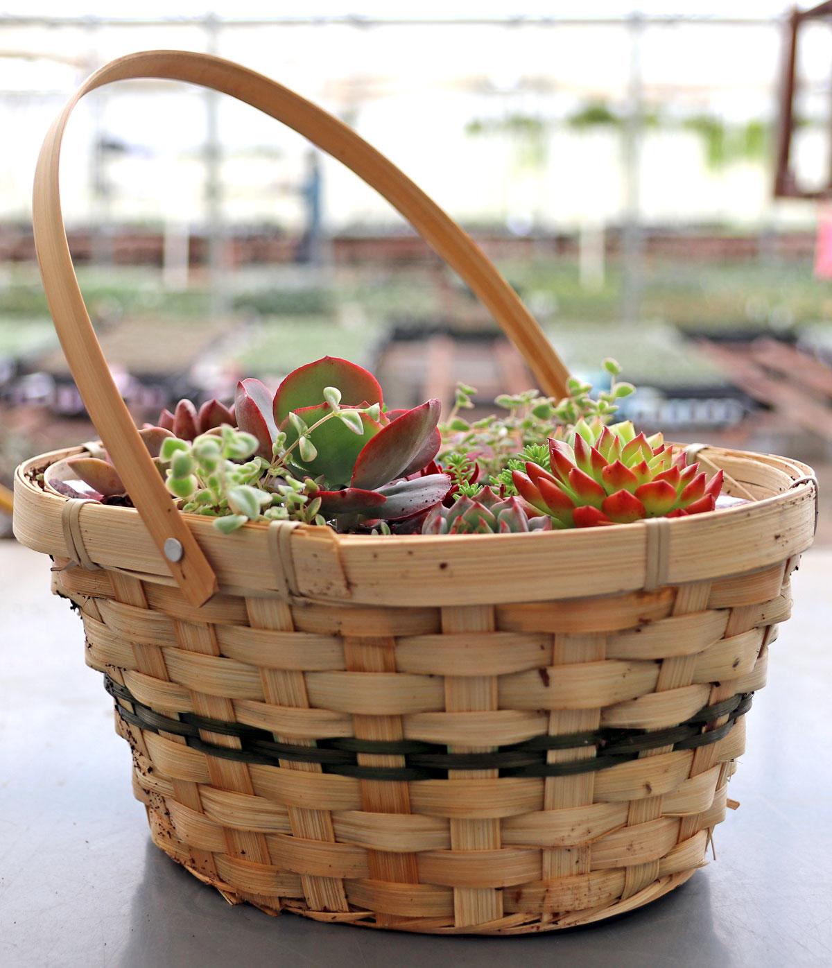 Succulent Easter Basket Employee Creations Week 13 Mountain Crest Gardens