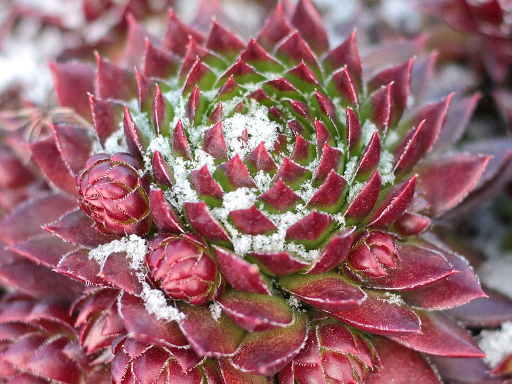 How Winter Cold Affects Your Succulents Mountain Crest Gardens
