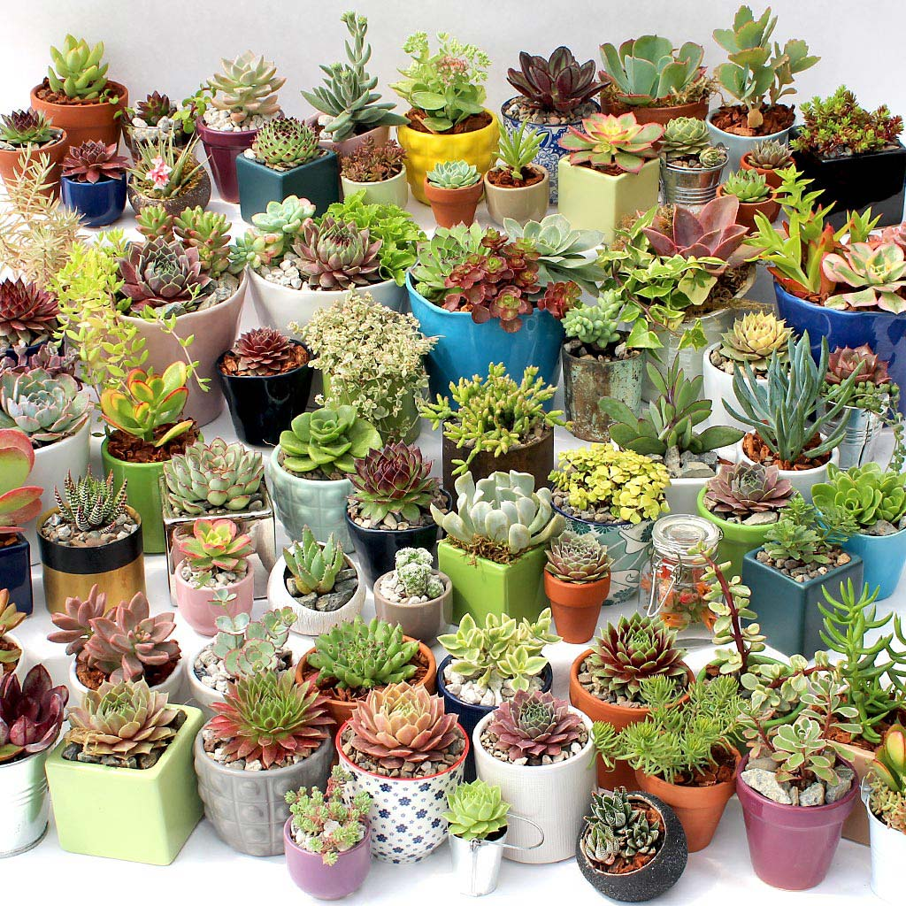 Pots for Indoor Succulents